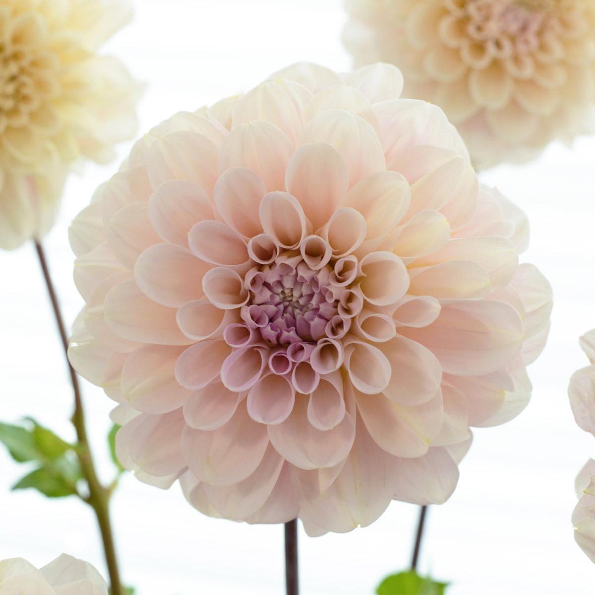 Moja kvetinova farma  :-) - Obrázok č. 18
