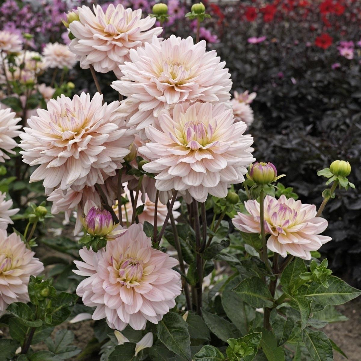 Moja kvetinova farma  :-) - Dianas Memory