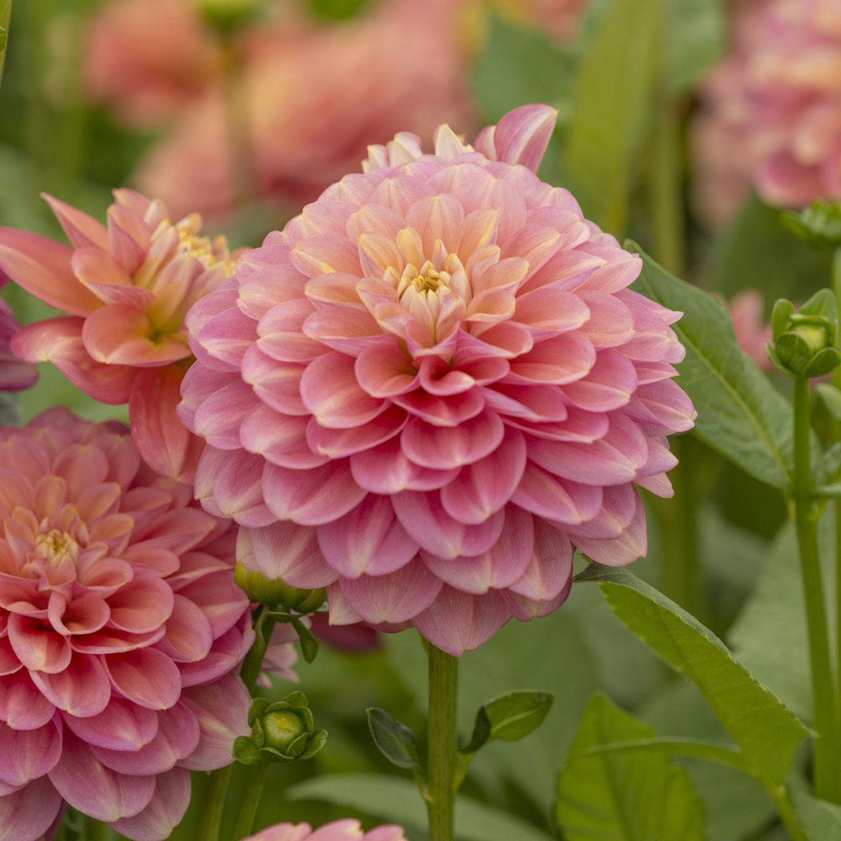 Moja kvetinova farma  :-) - Milena