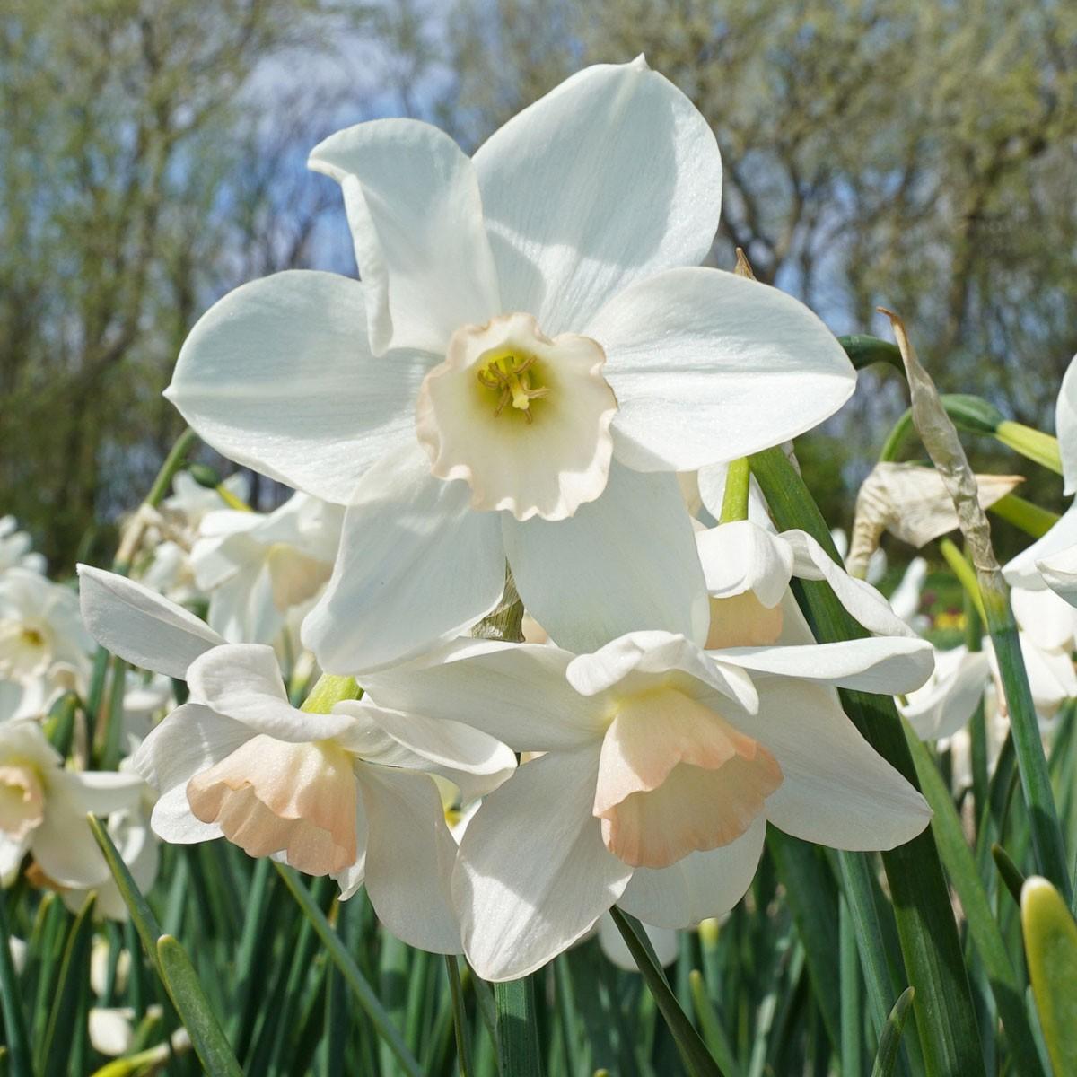 Moja kvetinova farma  :-) - Obrázok č. 15