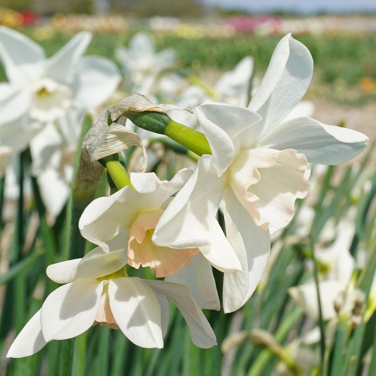 Moja kvetinova farma  :-) - Obrázok č. 16
