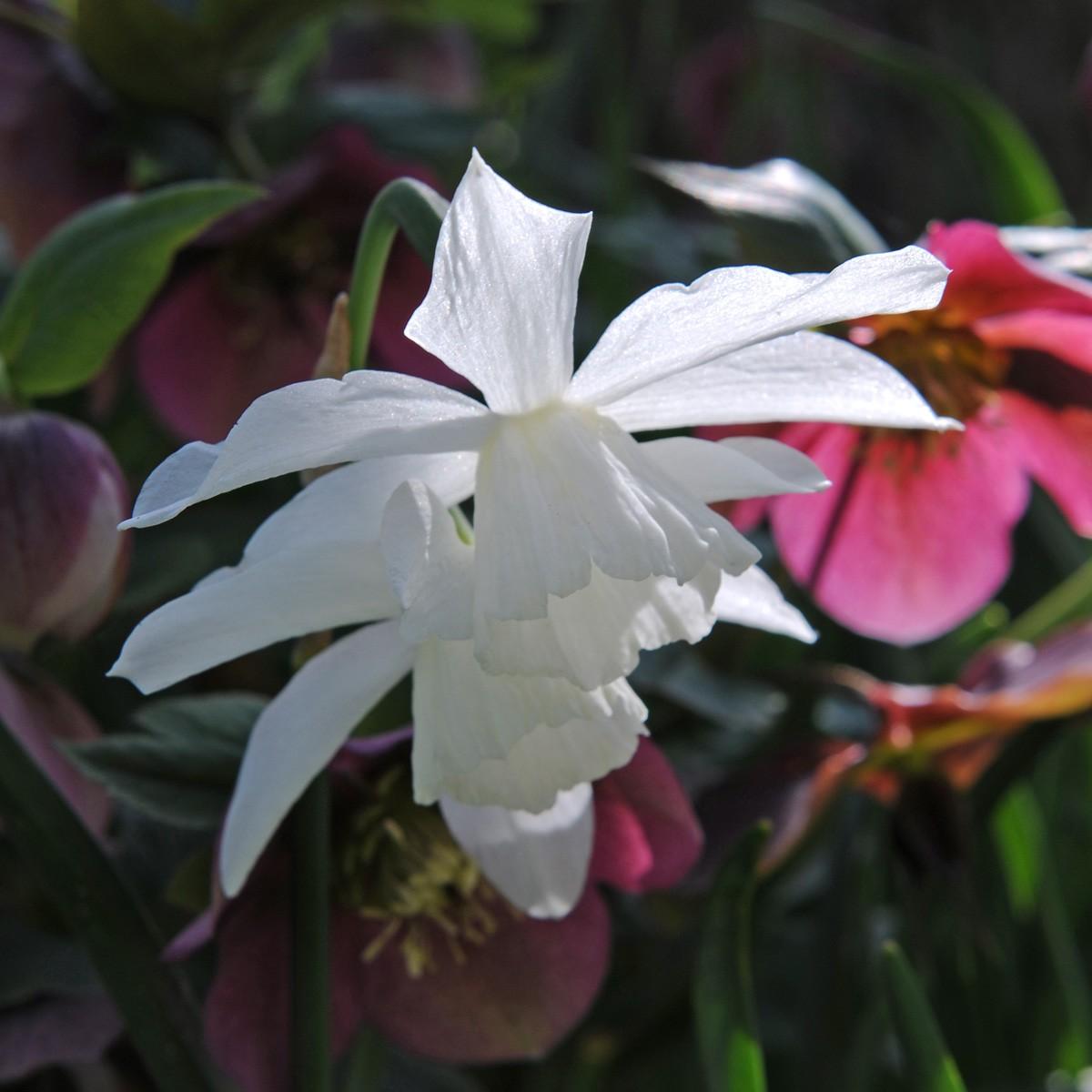 Moja kvetinova farma  :-) - Obrázok č. 17
