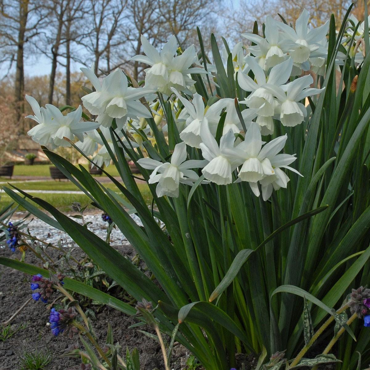 Moja kvetinova farma  :-) - Obrázok č. 13