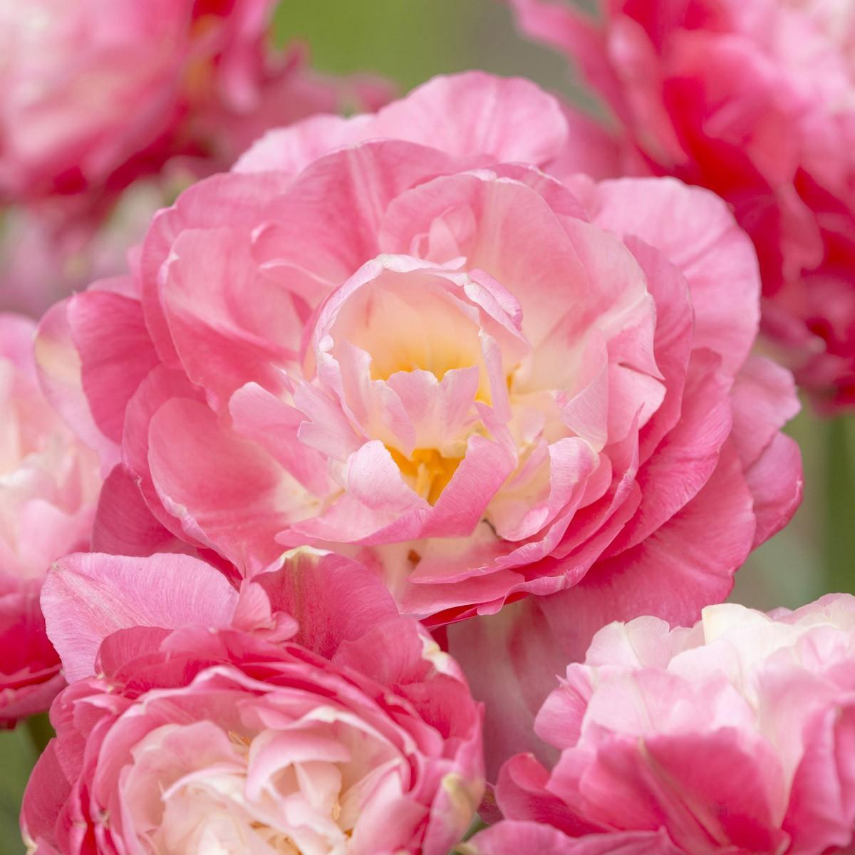 Moja kvetinova farma  :-) - double sugar