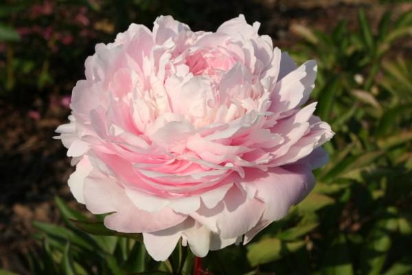 Moja kvetinova farma  :-) - Albert Crousse