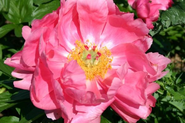 Moja kvetinova farma  :-) - Ludovica