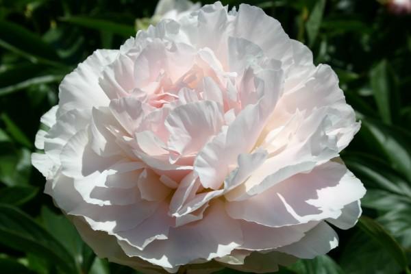 Moja kvetinova farma  :-) - Nancy Nicholls- uz doma