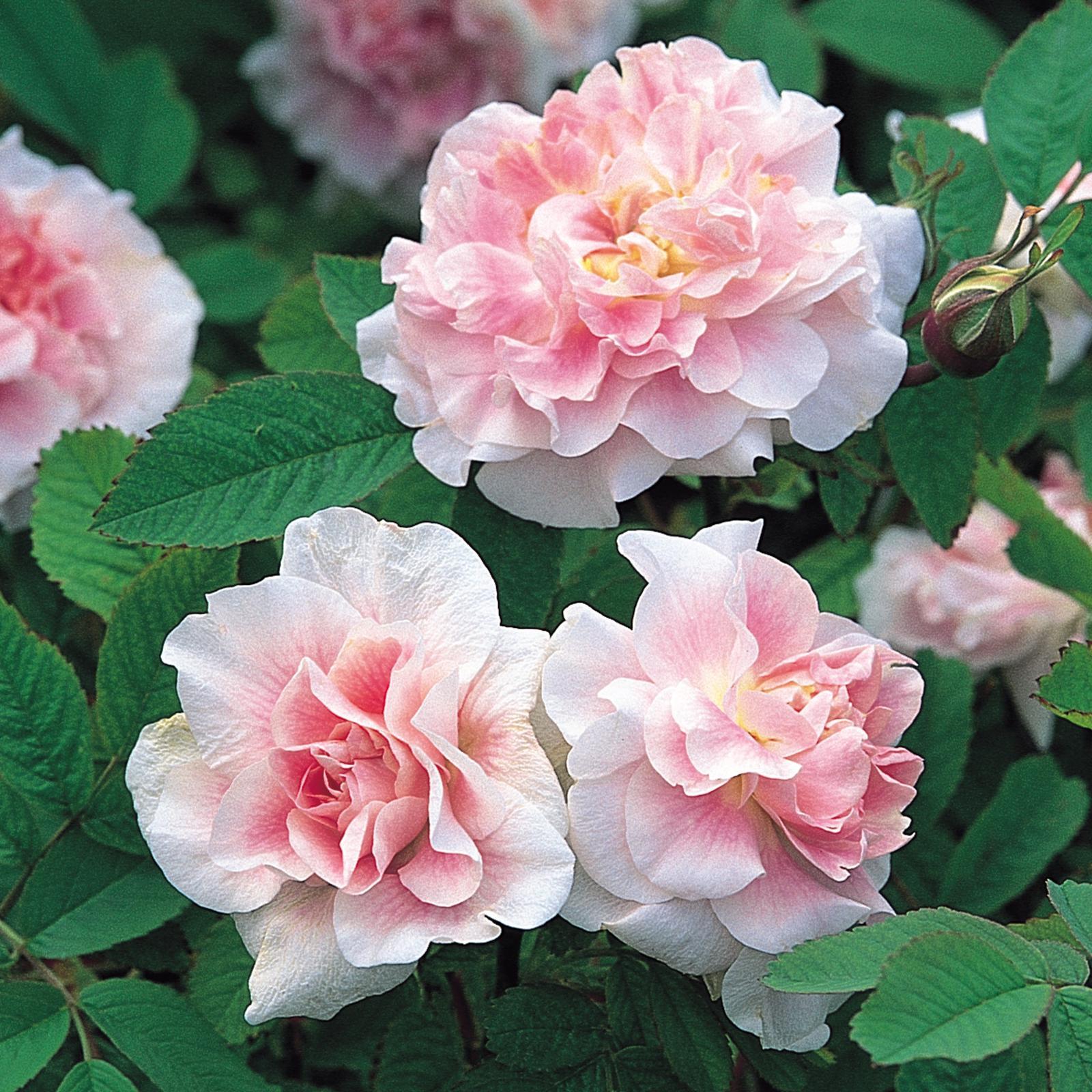 Moja kvetinova farma  :-) - MARTIN FROBISHER