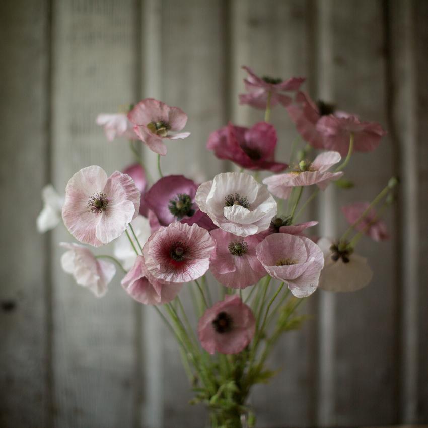 Moja kvetinova farma  :-) - Obrázok č. 61
