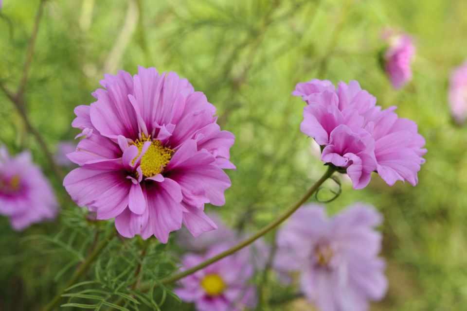 Moja kvetinova farma  :-) - Obrázok č. 67