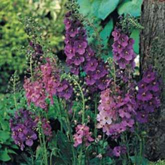 Moja kvetinova farma  :-) - Obrázok č. 77