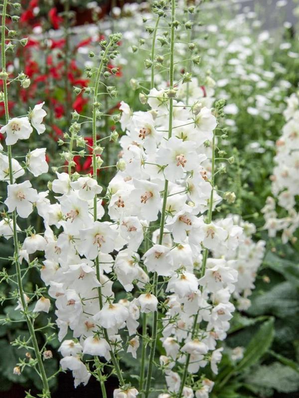 Moja kvetinova farma  :-) - Obrázok č. 2
