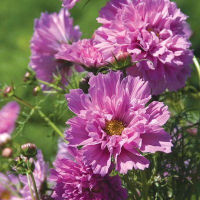 Moja kvetinova farma  :-) - Obrázok č. 70