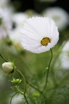 Moja kvetinova farma  :-) - Obrázok č. 10