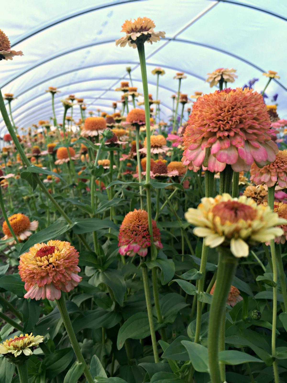 Moja kvetinova farma  :-) - Obrázok č. 100