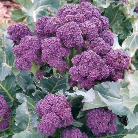 Moja kvetinova farma  :-) - Obrázok č. 76