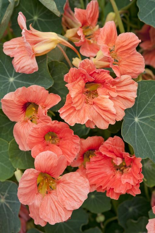 Moja kvetinova farma  :-) - Obrázok č. 97