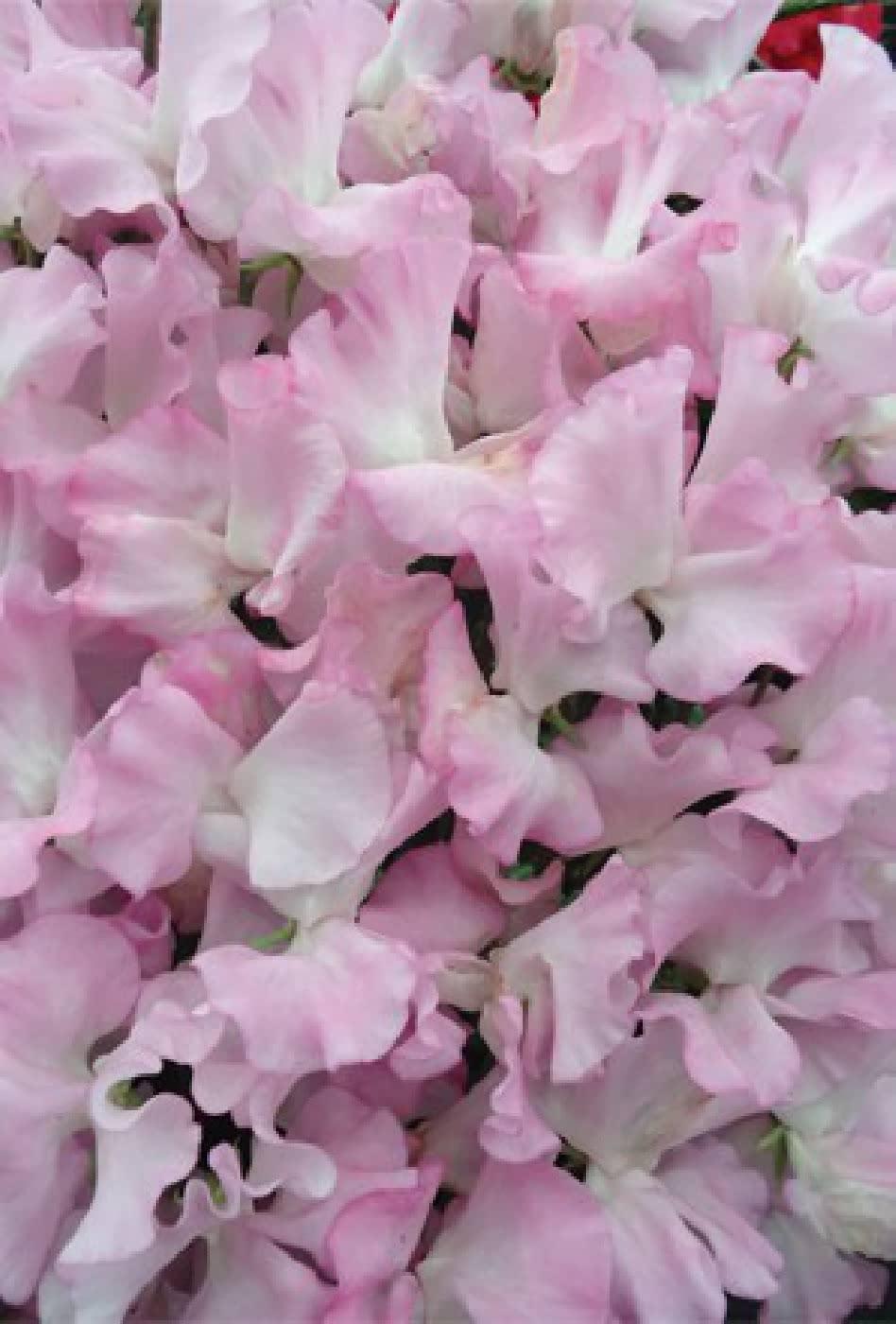 Moja kvetinova farma  :-) - Obrázok č. 54