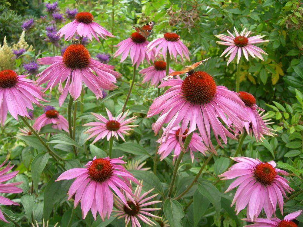 Moja kvetinova farma  :-) - Obrázok č. 50