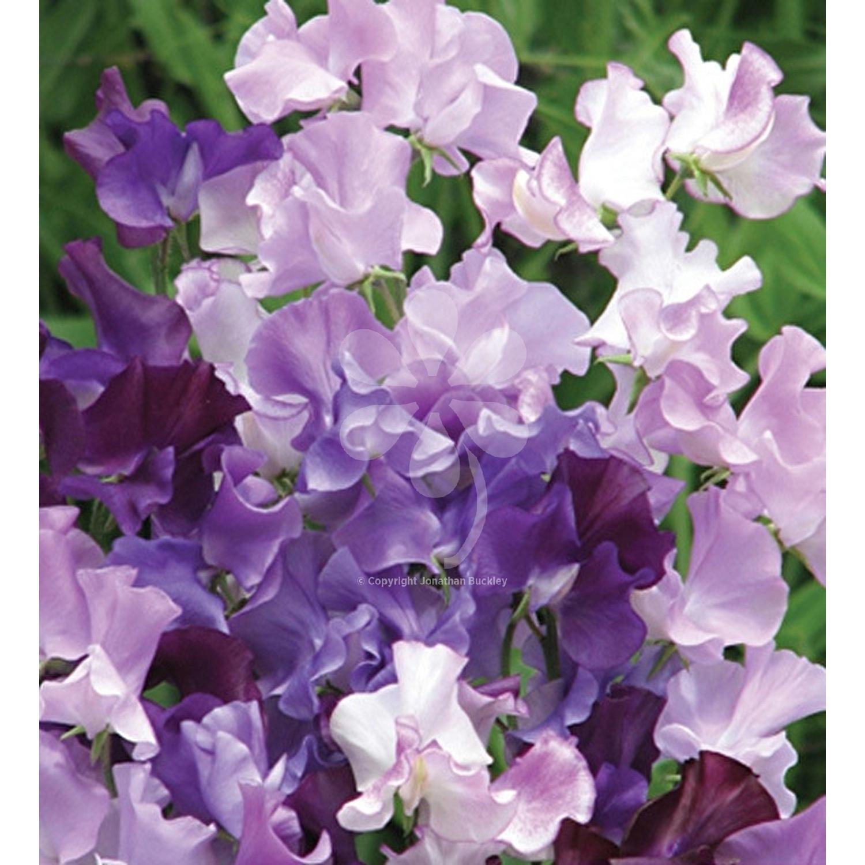 Moja kvetinova farma  :-) - Obrázok č. 78