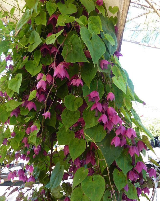 Moja kvetinova farma  :-) - Obrázok č. 88