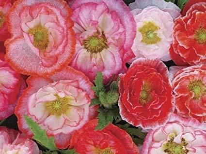 Moja kvetinova farma  :-) - Obrázok č. 47