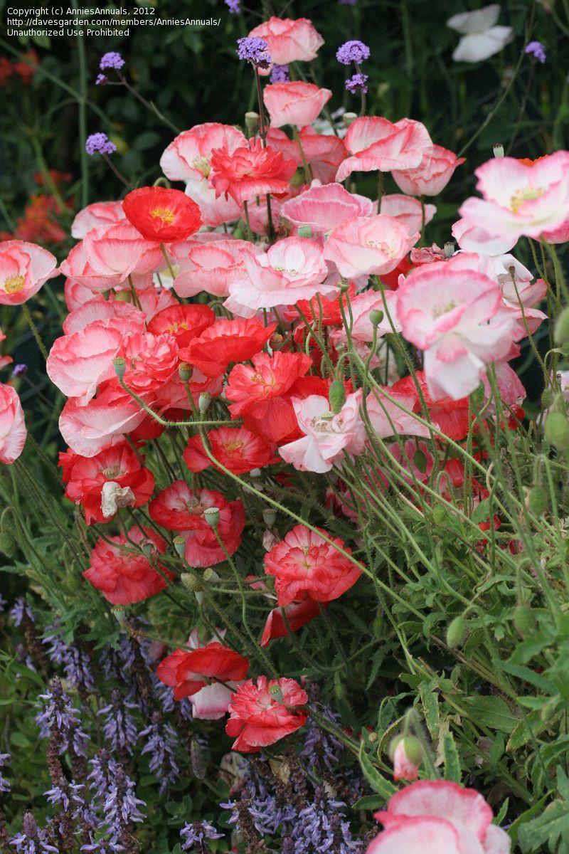 Moja kvetinova farma  :-) - Obrázok č. 46
