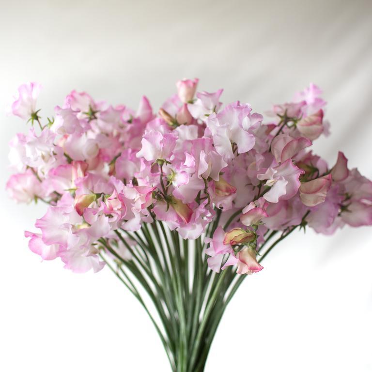 Moja kvetinova farma  :-) - Obrázok č. 56