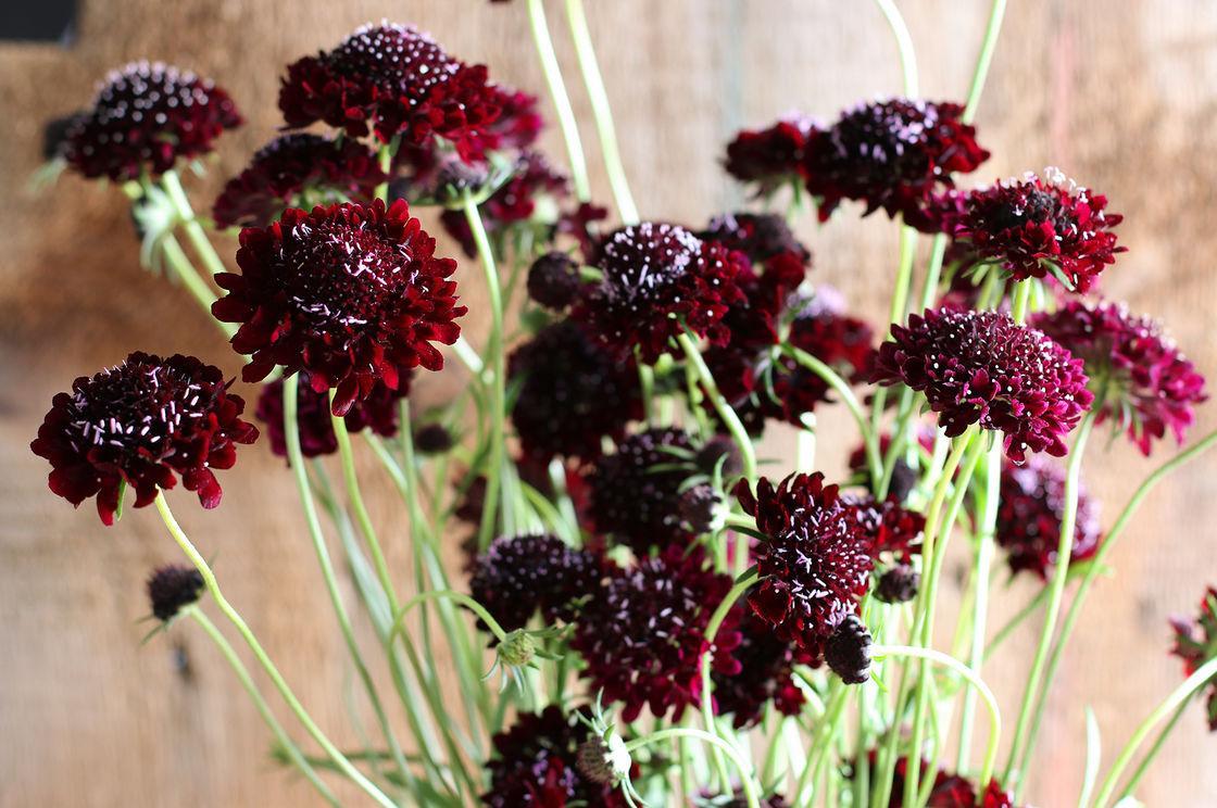 Moja kvetinova farma  :-) - Obrázok č. 85