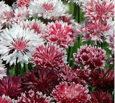 Moja kvetinova farma  :-) - Obrázok č. 90