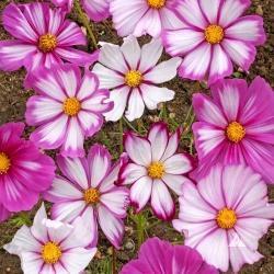 Moja kvetinova farma  :-) - Obrázok č. 68