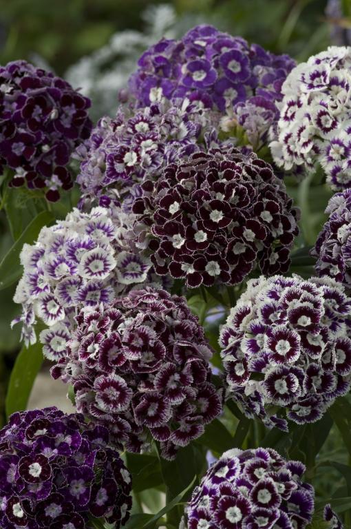 Moja kvetinova farma  :-) - Obrázok č. 83