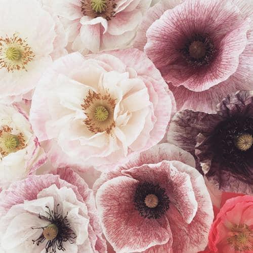 Moja kvetinova farma  :-) - Obrázok č. 64