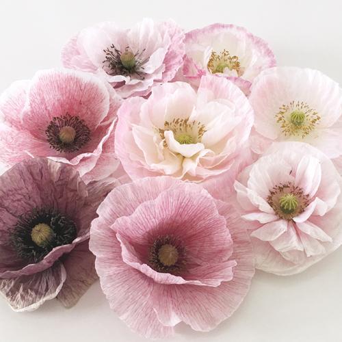 Moja kvetinova farma  :-) - Obrázok č. 63