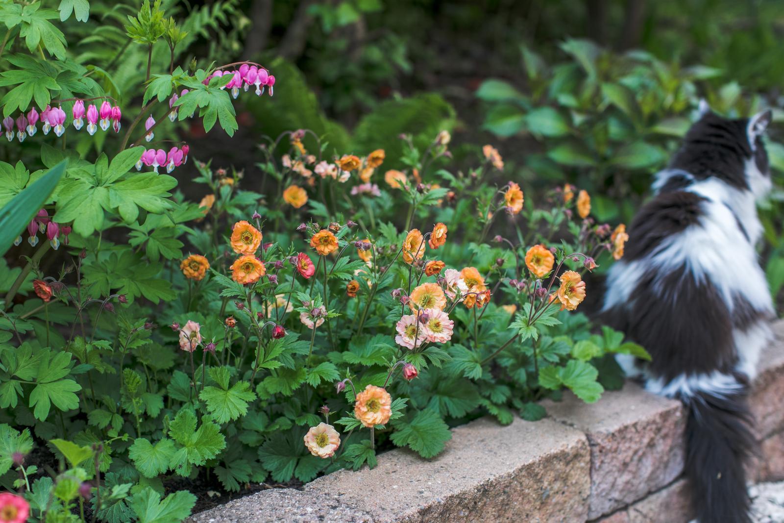 Terasa+ zahrada vzadu.. - Obrázok č. 36