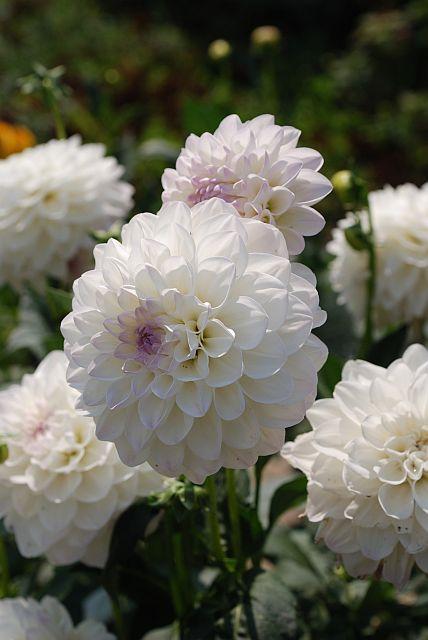 Moja kvetinova farma  :-) - doma uz