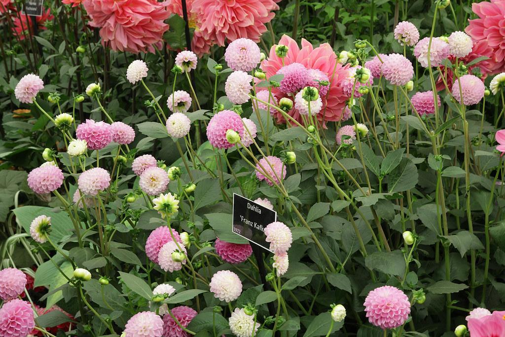 Moja kvetinova farma  :-) - objednane