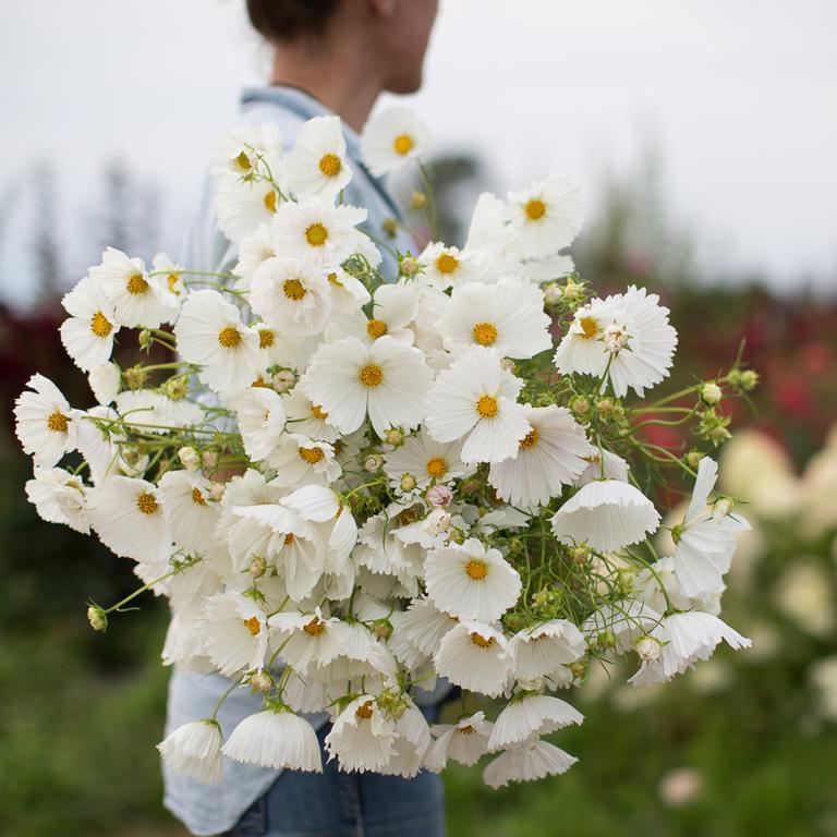 Moja kvetinova farma  :-) - Obrázok č. 11