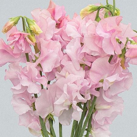 Moja kvetinova farma  :-) - Obrázok č. 30