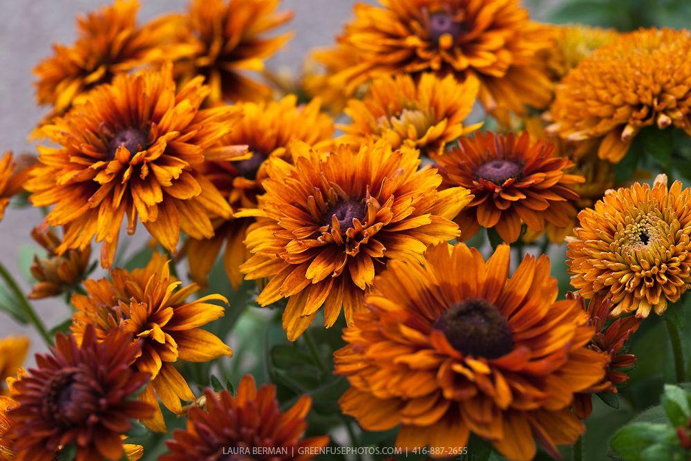 Moja kvetinova farma  :-) - Obrázok č. 99