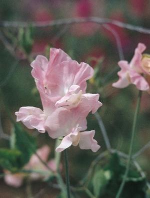 Moja kvetinova farma  :-) - Obrázok č. 32