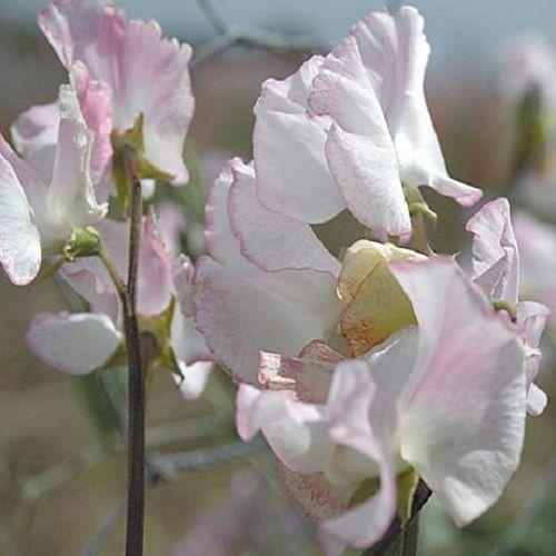 Moja kvetinova farma  :-) - Obrázok č. 19