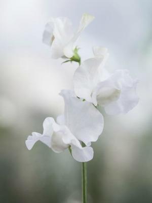Moja kvetinova farma  :-) - Obrázok č. 4