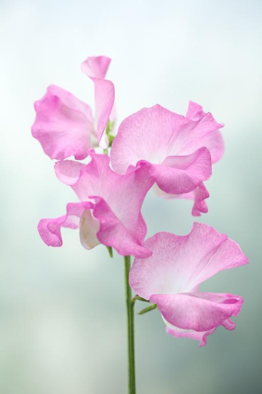 Moja kvetinova farma  :-) - Obrázok č. 57