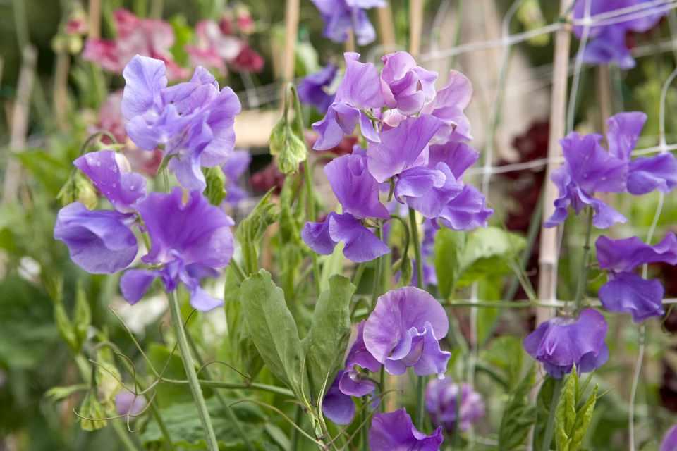 Moja kvetinova farma  :-) - Obrázok č. 79