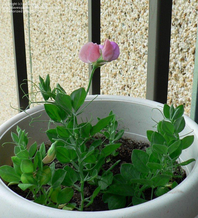 Moja kvetinova farma  :-) - Obrázok č. 59
