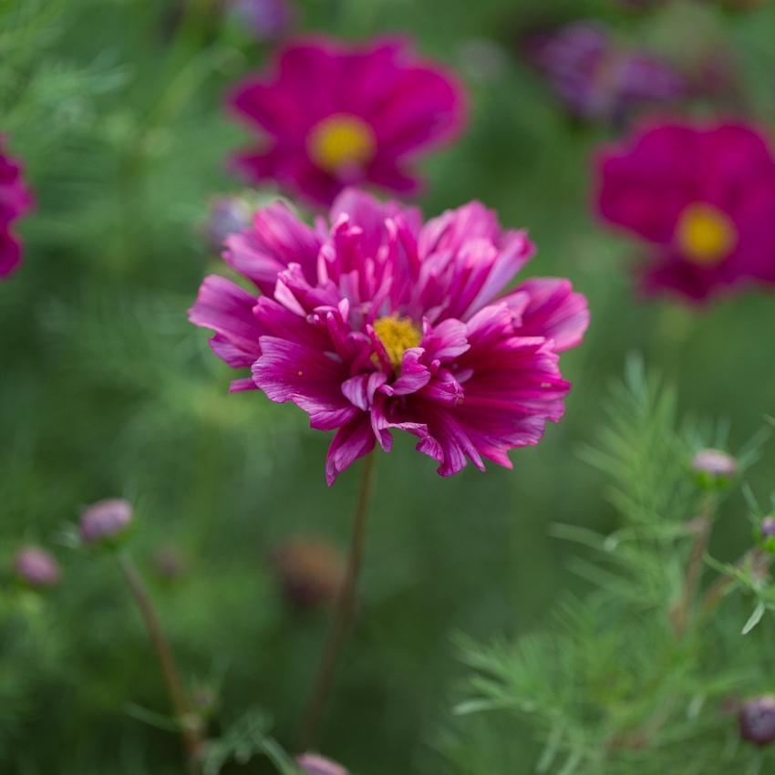 Moja kvetinova farma  :-) - Obrázok č. 74