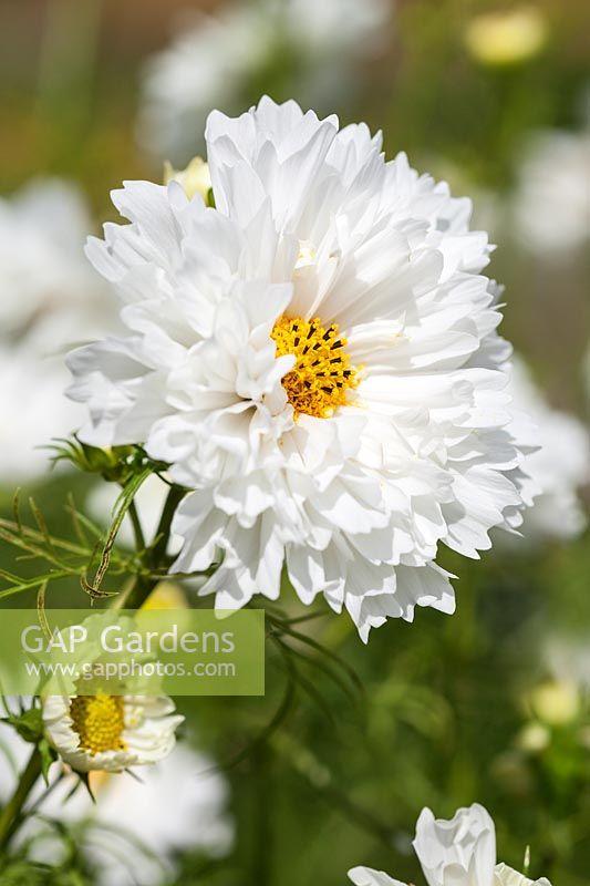 Moja kvetinova farma  :-) - Obrázok č. 3