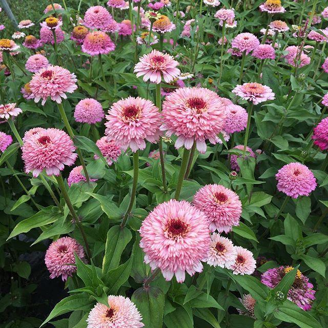 Moja kvetinova farma  :-) - Obrázok č. 58