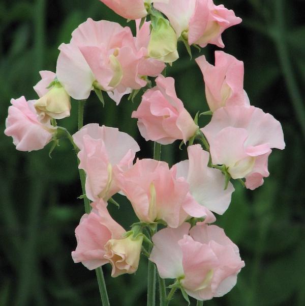 Moja kvetinova farma  :-) - Obrázok č. 31